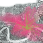 Courtesy of RideNewOrleans.org, this heat map depicts where surveyed riders reported that they started and ended their trips
